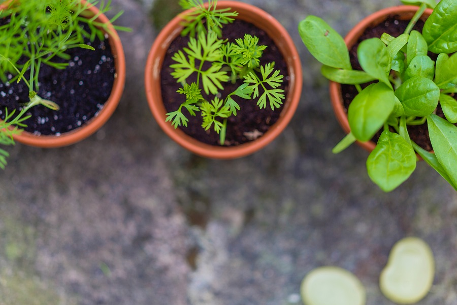Potted office plants