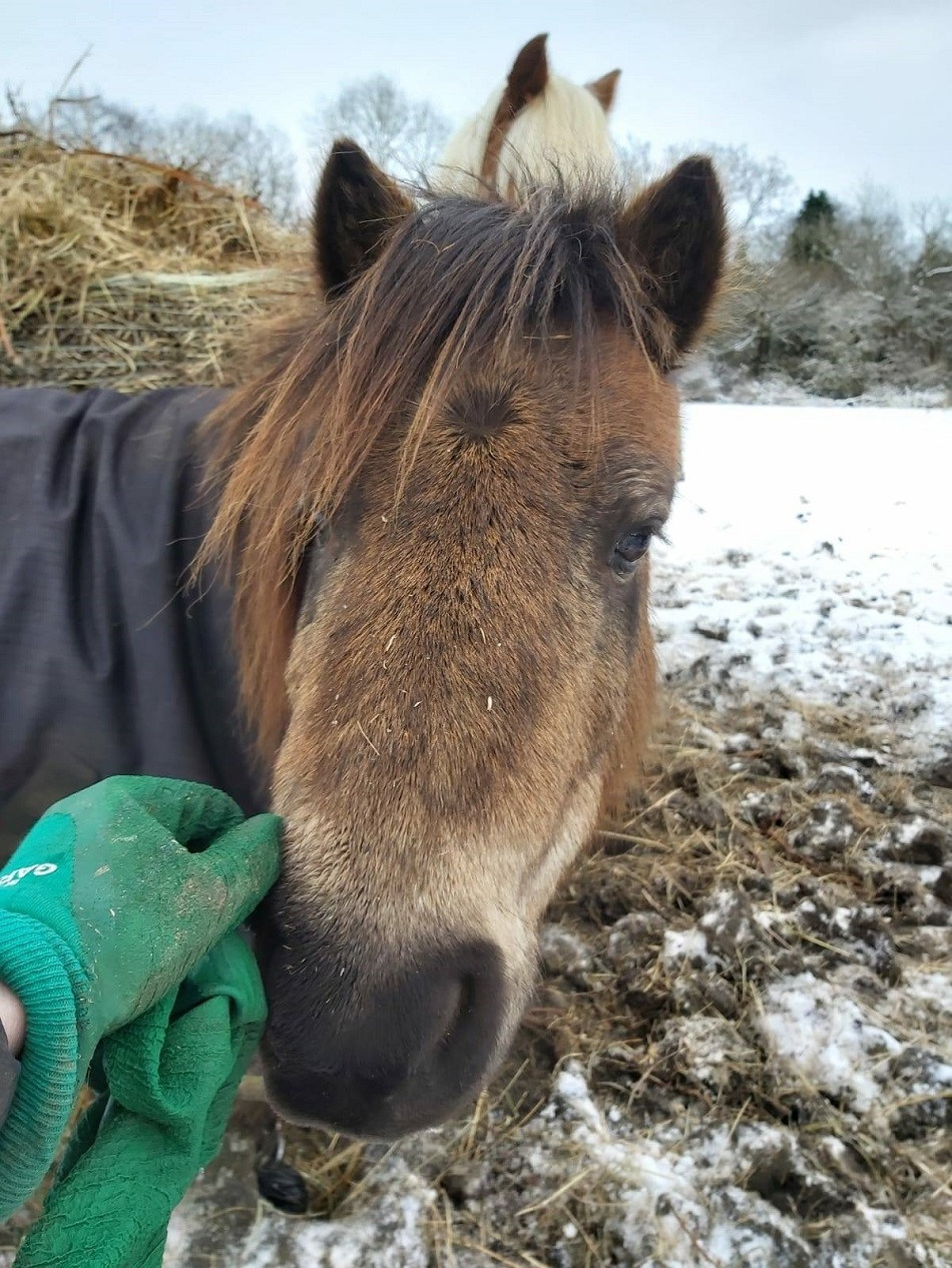 safe haven animal rescue horses
