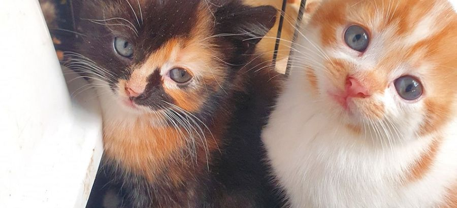 safe haven animal rescue kittens